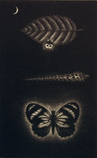 Product Image - Leaf, shell, butterfly<BR>Year: 1975<BR>